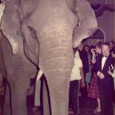 Arne Bue med elefant